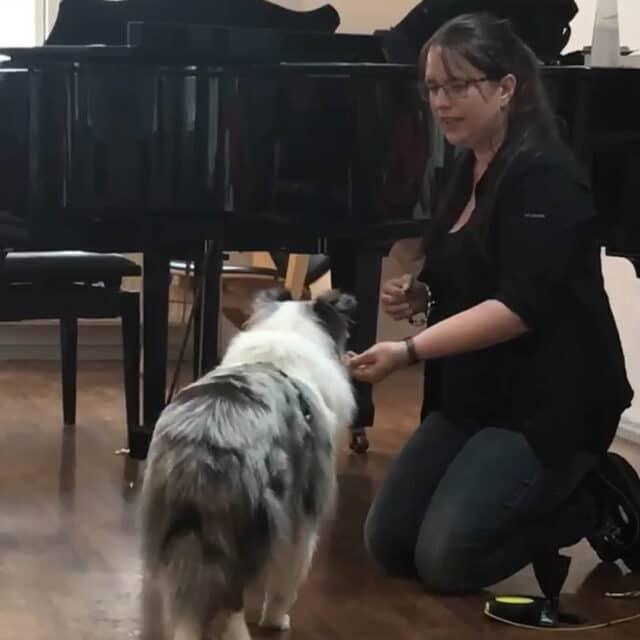 Hunden - Lær mere om menneskets bedste ven 1